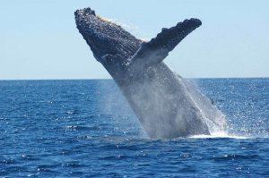 C'è uno straordinario mondo perduto nell'oceano australiano: è un paradiso della biodiversità 1