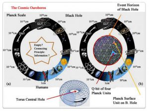 Processi della Scienza e dell'Arte modellati come Oloflusso di Informazione attraverso la geometria toroidale 3