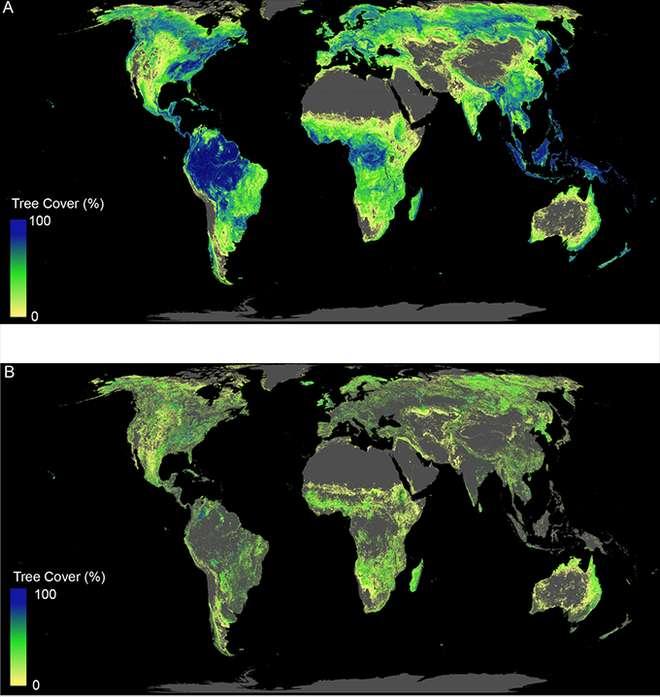Nuove foreste per rallentare il cambiamento climatico 2