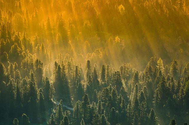 Nuove foreste per rallentare il cambiamento climatico 1