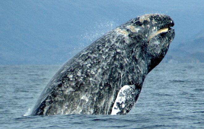 Balene accecate dalle macchie solari