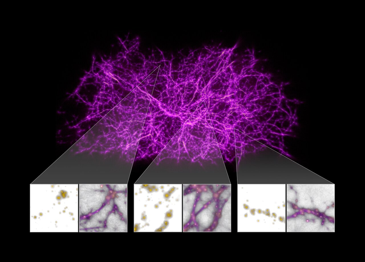 Filamenti cosmici ricalcano la melma policefala 2